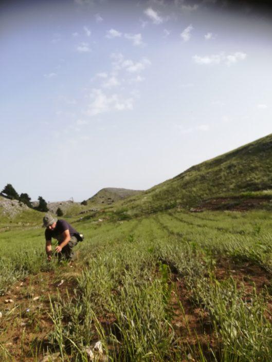 Παρακολούθηση φυτείας σιδερίτη στον Ταύγετο
