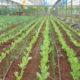 Υπηρεσίες για την βιολογική καλλιέργεια